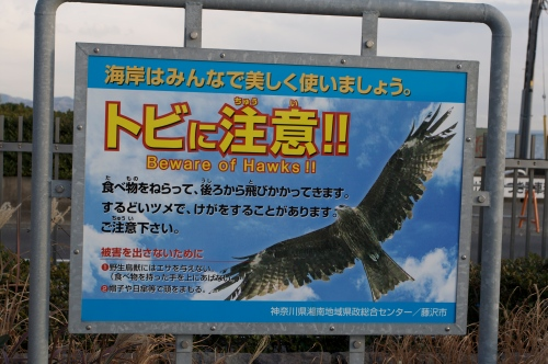 Killer Hawks